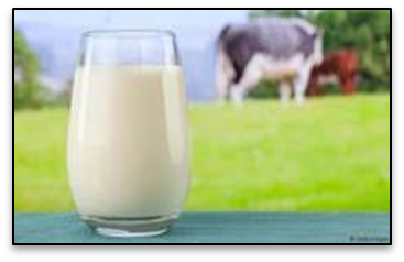 Dairy: Why It Should Be Avoided at All Costs- The Truth
