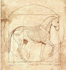 Possible Vitruvian Horse