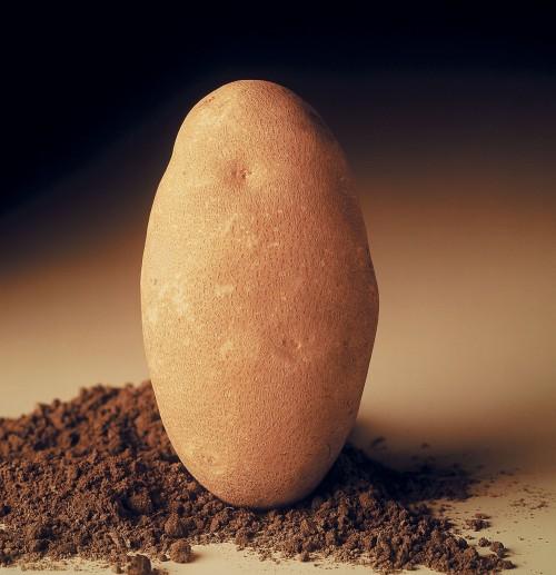Potato_Cropped