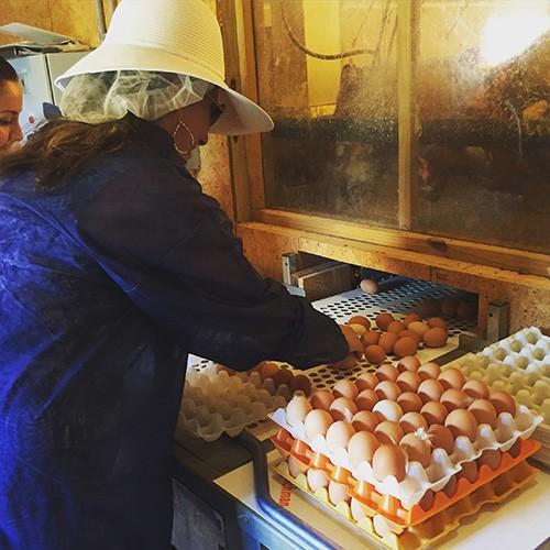 Packing pasture-raised eggs