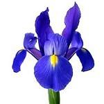 iris note