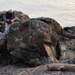 Jones Island has some big rocks