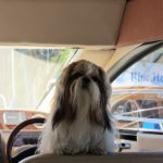 Can I take the helm dad? asks  Mochhi?