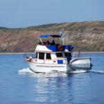 Blue Heron cruising past Protection Island