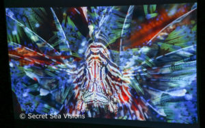 photo of sea life - http://secretseavisions.com/