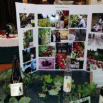 Talequah Farms currant growers