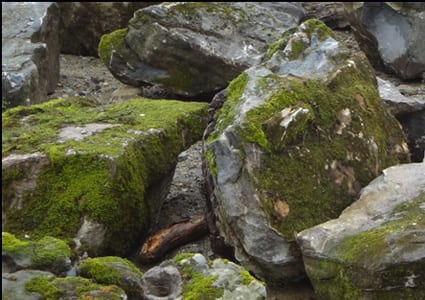 Examples Of Moss Rock for Water Gardens