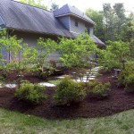 Third year of the amelanchier shade garden...