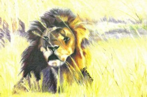 lion-rosemarie