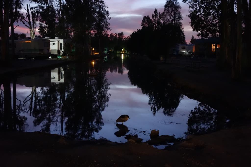 Wilderness Lakes, Menifee, CA (1/2/2016 – 1/23/2016)
