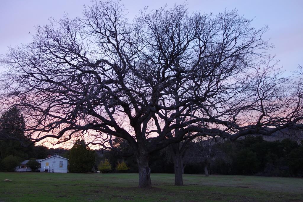 Rancho Oso, Santa Barbara, California (1/23/2016 – 2/13/2016)