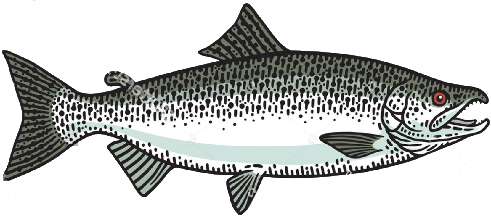 chinook-king-salmon-fish-toronto-fishing-charter