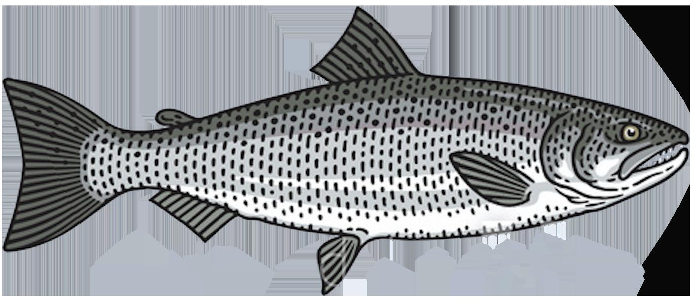 coho-silver-salmon-fish-toronto-fishing-charter