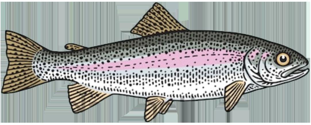 steelhead-rainbow-trout-fish-toronto-fishing-charter