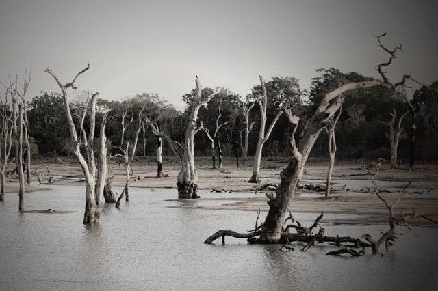 The Flood That Didn't Work