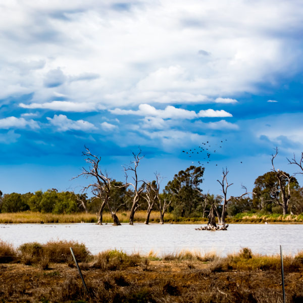 The wetlands, Warren NSW