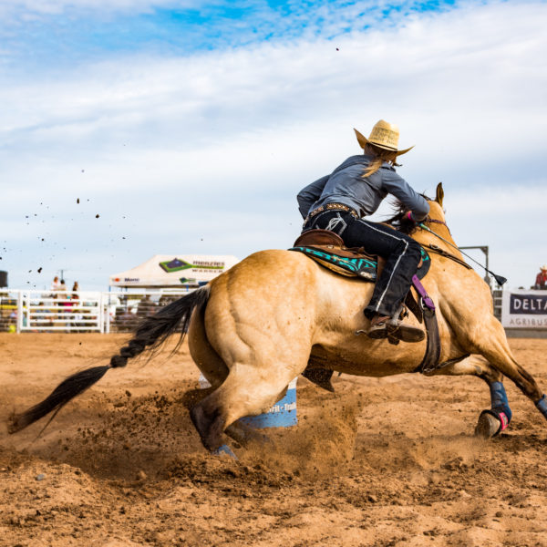 Rodeo Horse 2018