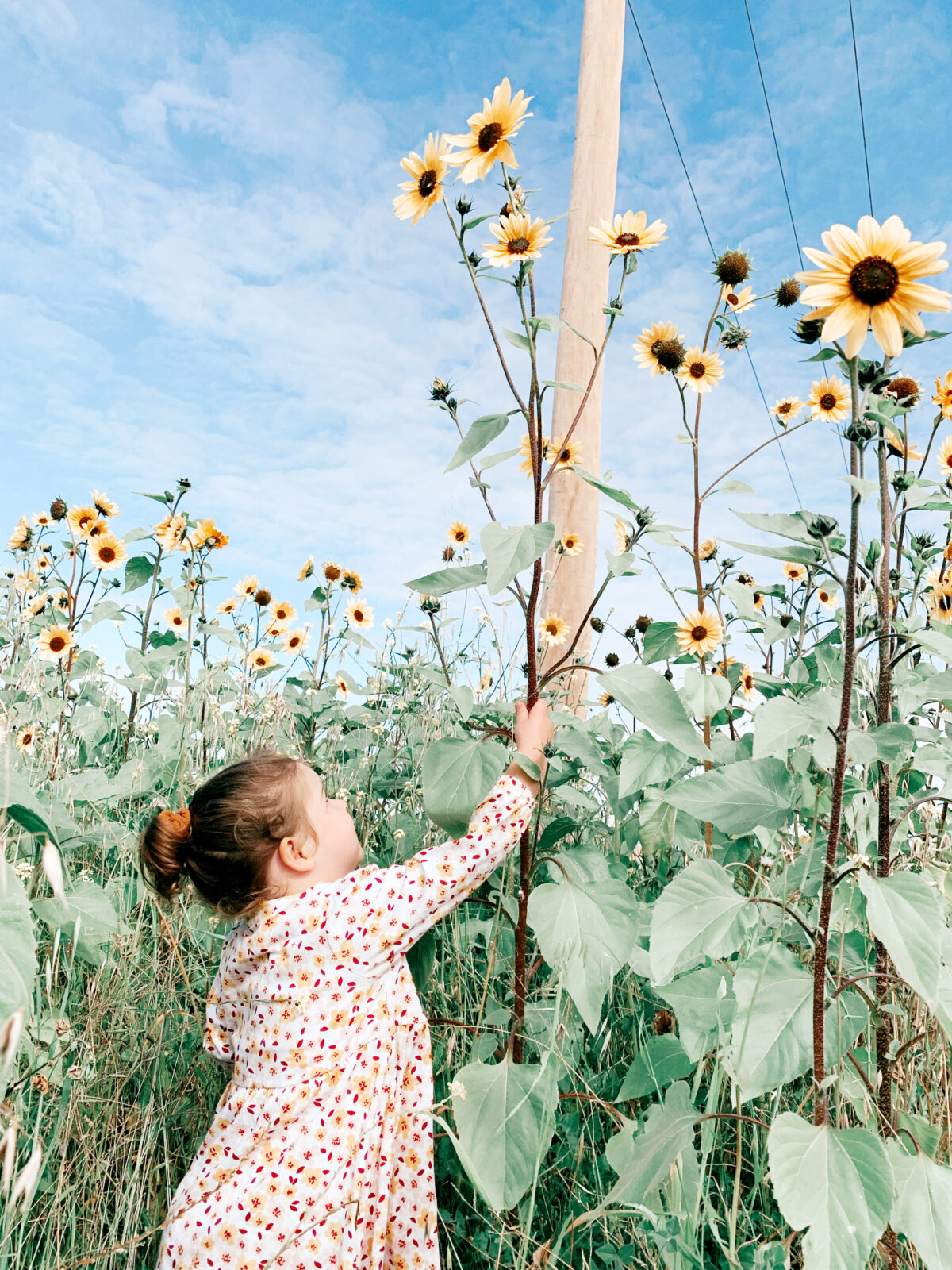 Erin Brouff_Open_Isolation Exploration - Sunflower Patches
