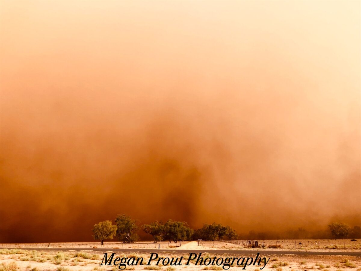 Megan Prout_Open_Kickin up dust