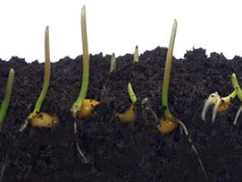 coated-seeds
