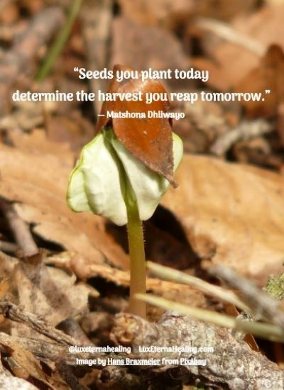 """""""Seeds you plant today determine the harvest you reap tomorrow."""" ― Matshona Dhliwayo"""