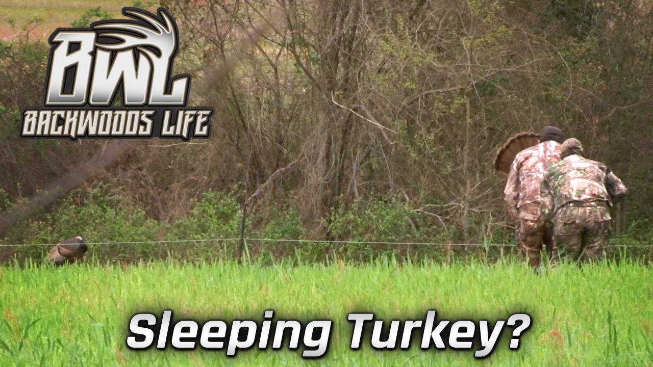 Sleeping Turkey?