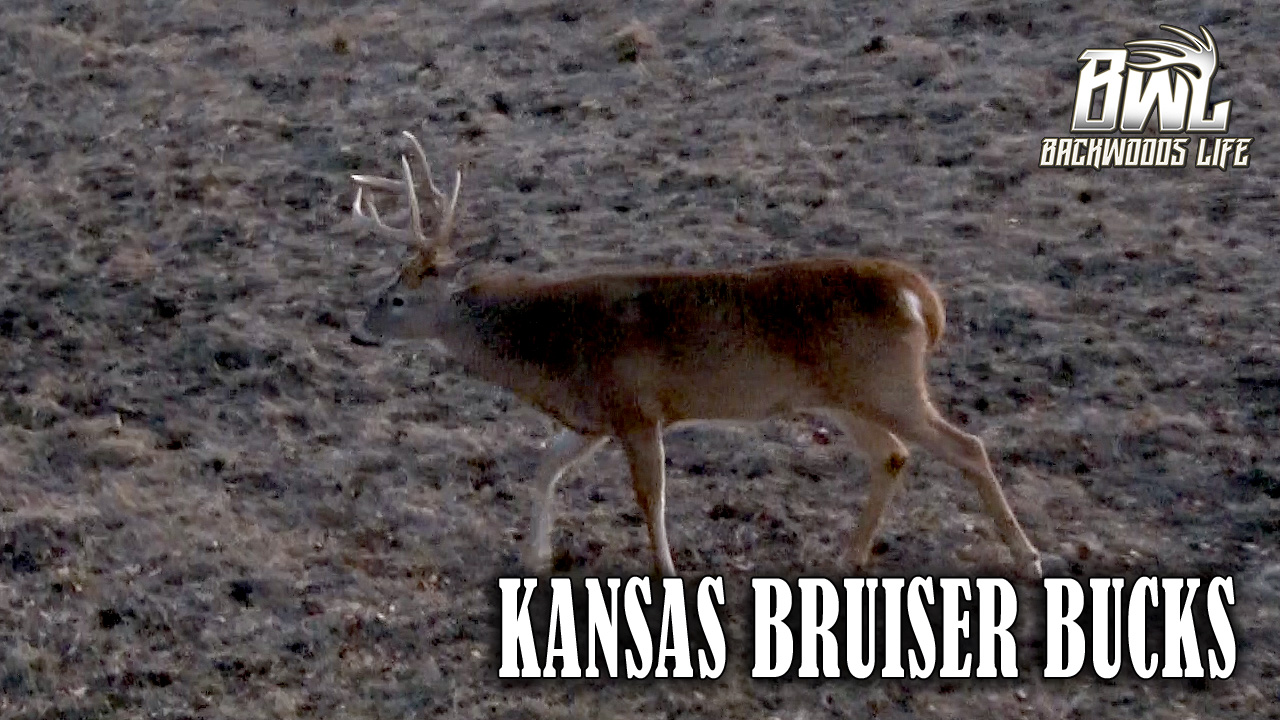 Kansas Bruiser Bucks