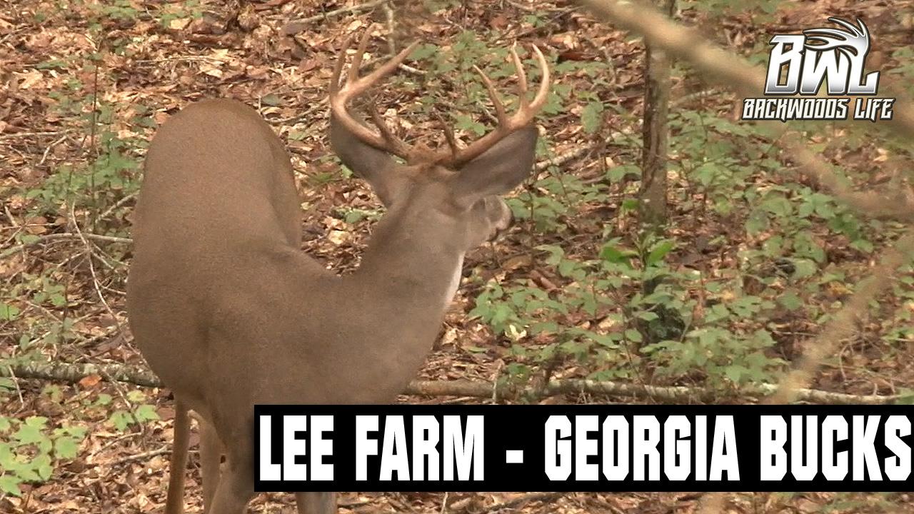 Lee Farm Hunting