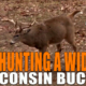 Wisconsin Bow Buck