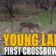Isabella-Crossbow-Buck