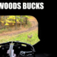 Backwoods Bucks