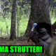 Alabama Gobbler