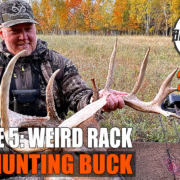 Weird Racked Bow Buck - BWB20.5