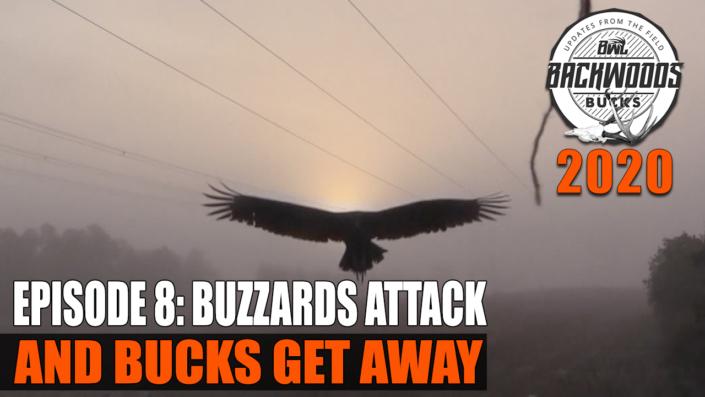 Buzzards Attack and Bucks Get Away