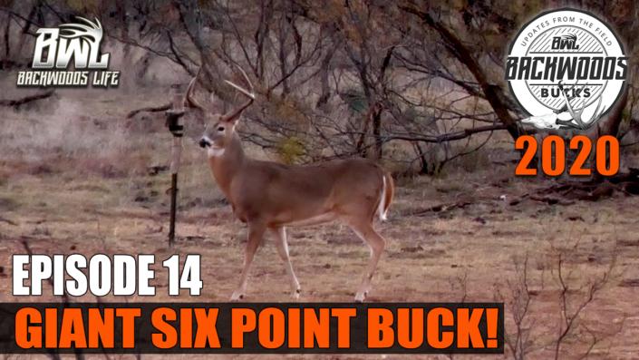 Giant Six Point