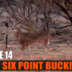 Giant Six Point