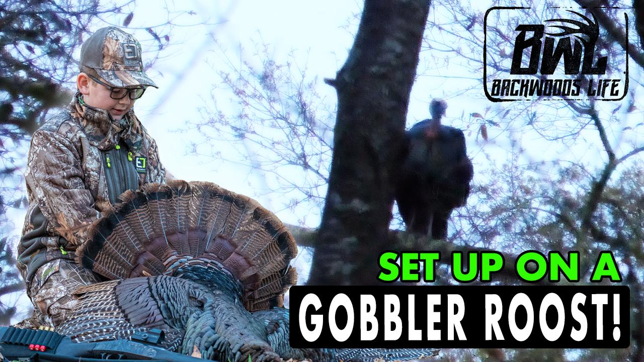 Set Up on A Gobbler Roost