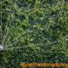 Vòi phun cỏ Rotary Rain Bird