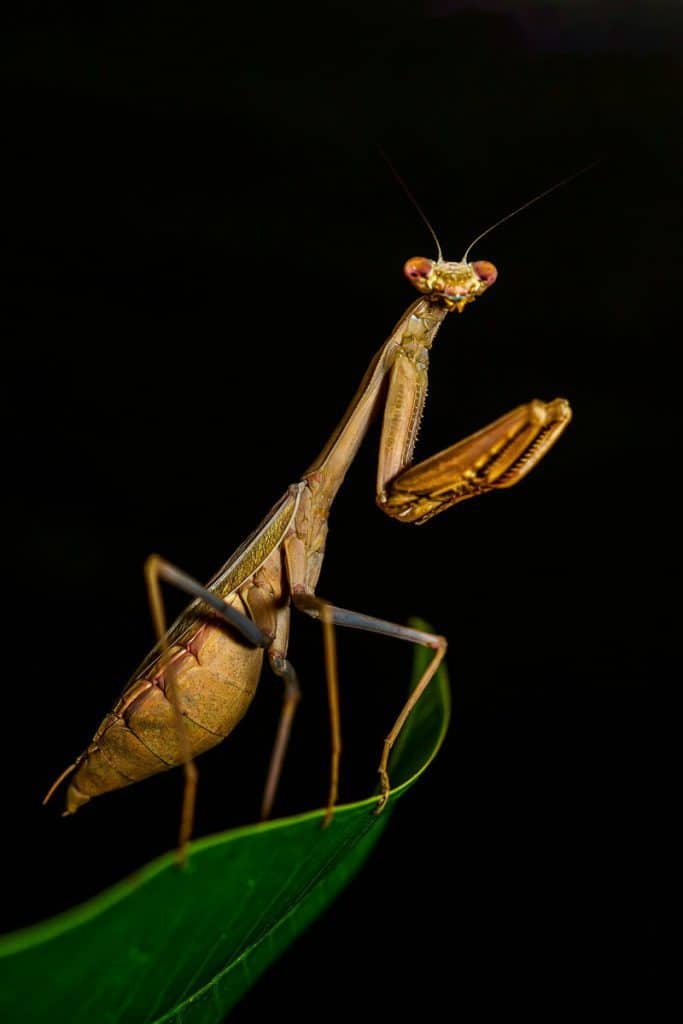 best pet insect