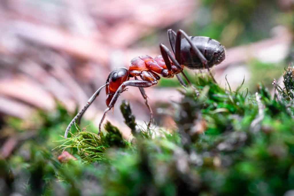 where do ants hide
