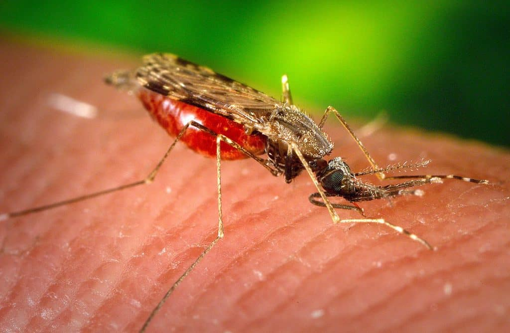 By James Gathany, USCDCP - https://pixnio.com/fauna-animals/insects-and-bugs/mosquito/photograph-depicted-a-female-anopheles-albimanus-mosquito-while-she-was-feeding-on-a-human-host#, CC0, https://commons.wikimedia.org/w/index.php?curid=83022999