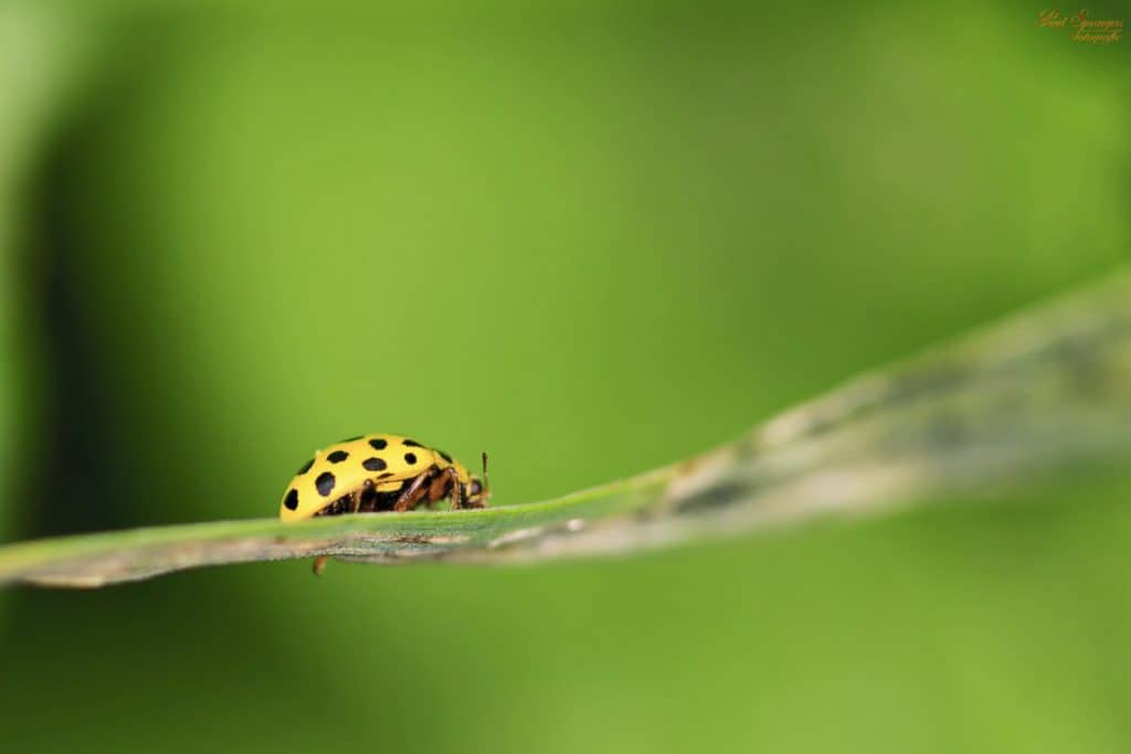 Image result for copyright free images of Difference Between A Boy and A Girl Ladybug