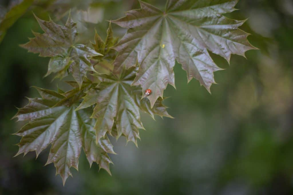 Image result for copyright free images of What happens to a ladybug during overwintering