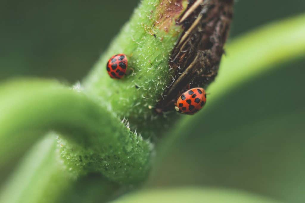 Image result for copyright free images of Ladybugs