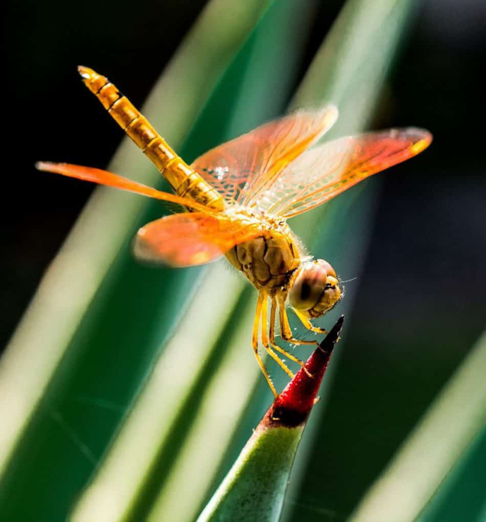 Image result for copyright free images  of Dragonflies