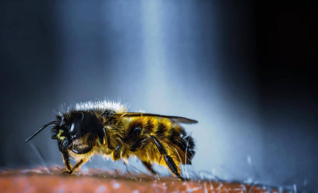 Image result for copyright free images of The Positive Side of Bee Symbolism