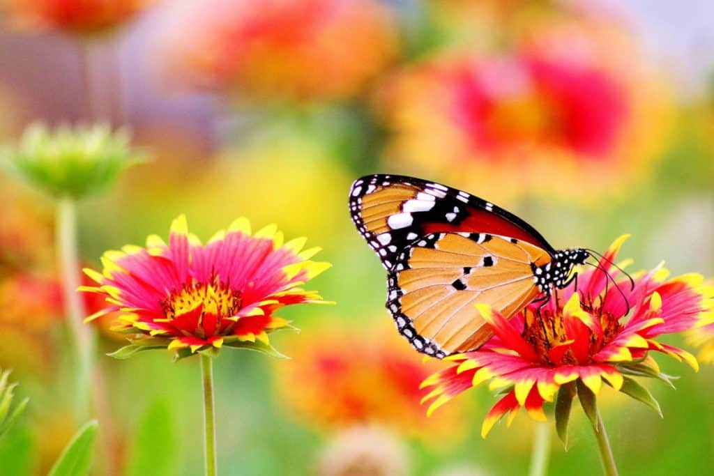 The colors of butterflies