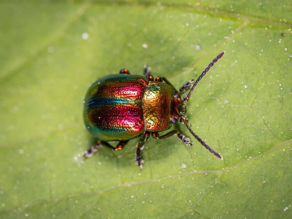 color-of-beetles