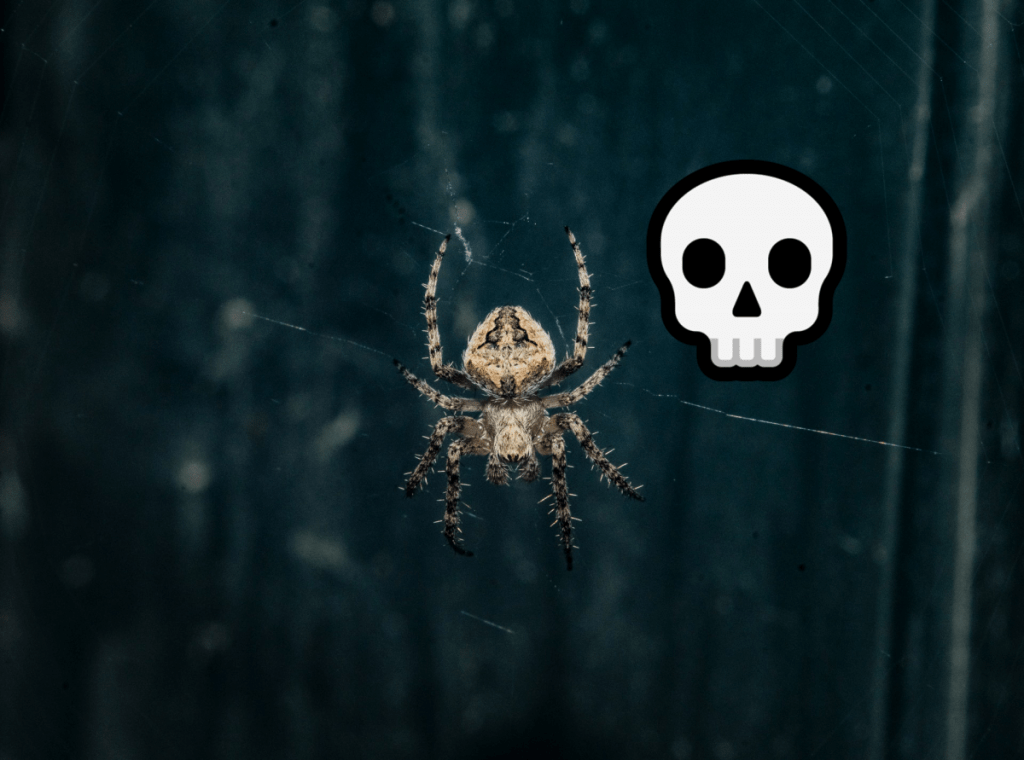 do male spiders know they will be eaten