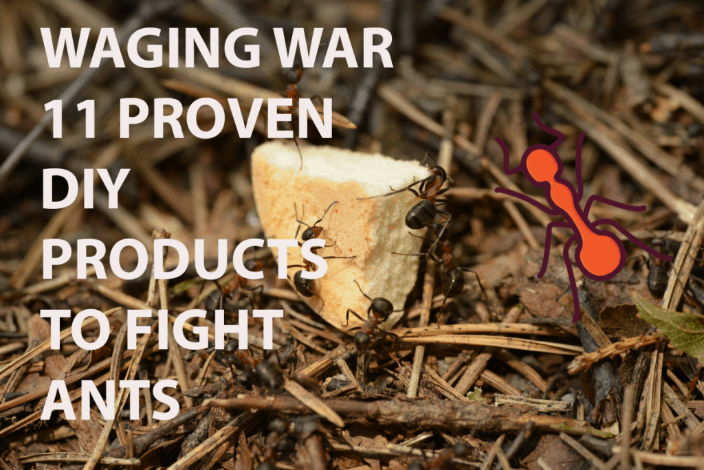 11 proven ways to fight ants